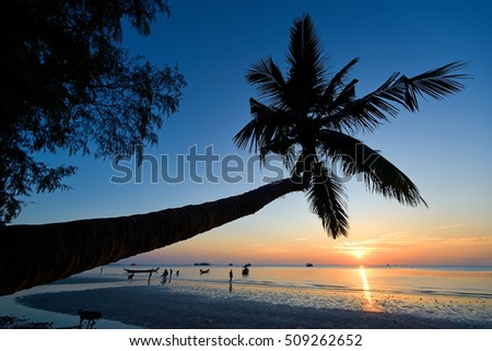 sunset at koh tao with siluate coconut palm