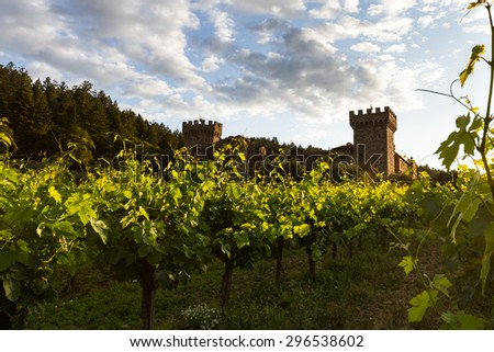 sunset at the castle, lush green grape vines with a golden tone as the sunsets behind the horizon - stock photo