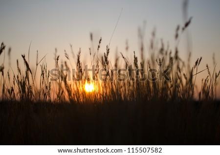 Sunset behind grains - stock photo