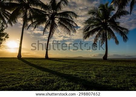 sunset behind palms in australia - stock photo