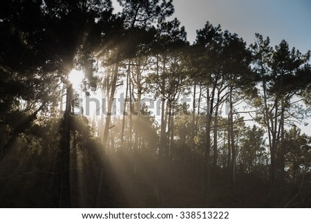 sunset behind the trees in the forest - stock photo