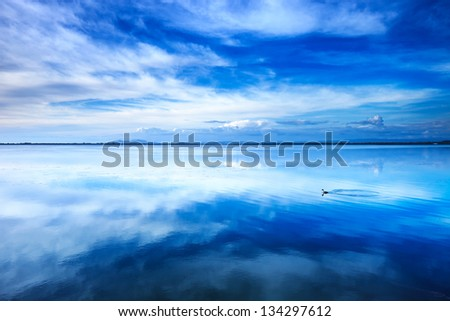 Sunset blue landscape. Little grebe diving bird in a lagoon with reflection. Orbetello lagoon with reflection, Argentario, Tuscany, Italy.