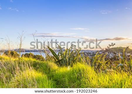 Sunset city skyline view through the green grass. Auckland, New Zealand. - stock photo
