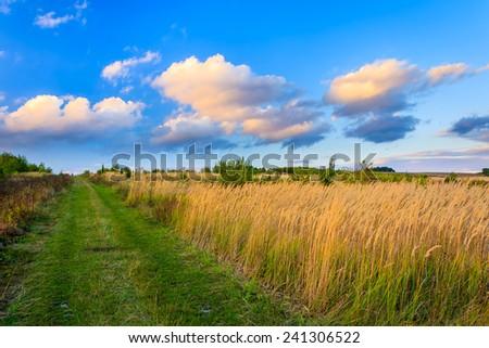Sunset clouds over wheat field in Polish countryside, Swietokrzyskie voivodship, Poland - stock photo