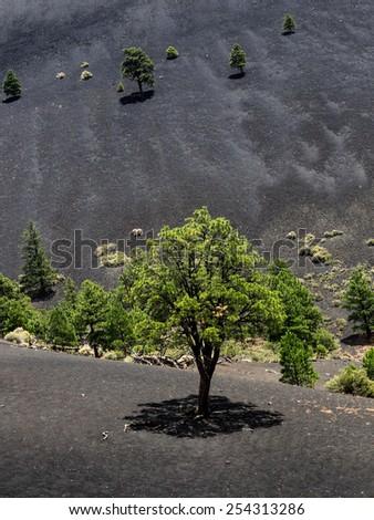 Sunset Crater Volcano National Monument lava flow, Arizona - stock photo