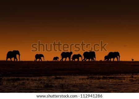 Sunset Elephants - stock photo