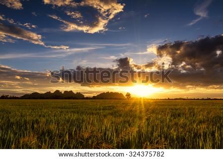 Sunset Field - stock photo