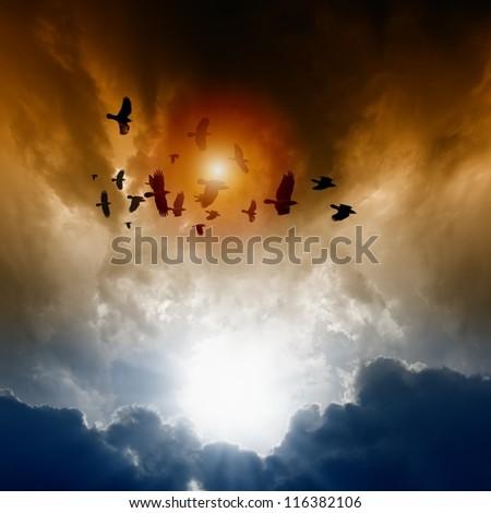 Sunset, flock of flying ravens, crows in dark sky - stock photo