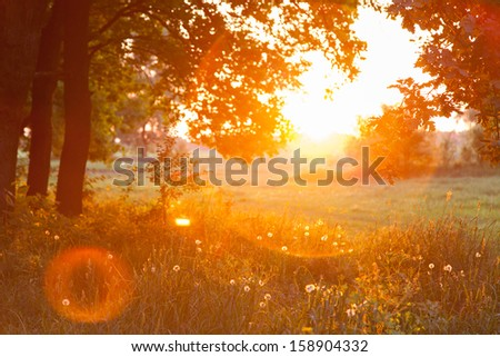 Sunset. Forest Glade. The branches of the trees. Green grass. Glare. - stock photo
