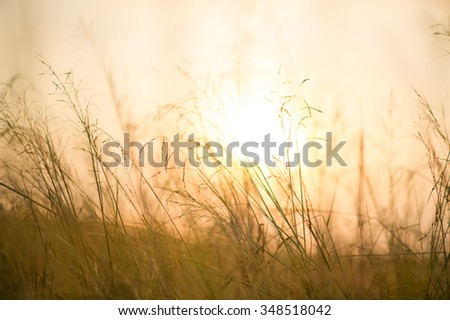 Sunset in a field
