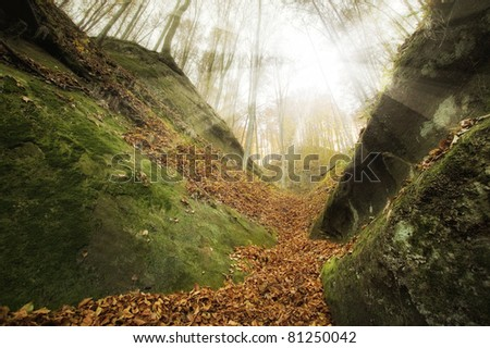 sunset in a wild forest with huge cliffs - stock photo