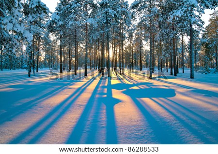 Sunset in a winter forest. - stock photo