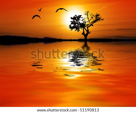sunset in africa - stock photo