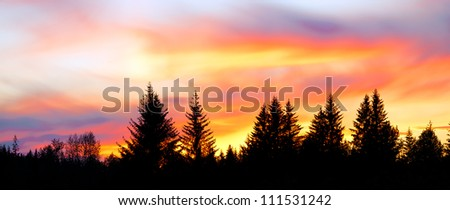 Sunset in Alaska. Panorama of a big colorful sky above silhouetted trees. - stock photo