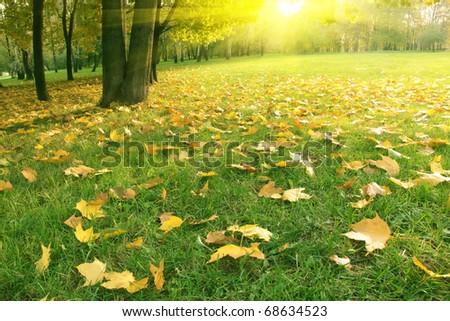 Sunset in autumn park. - stock photo