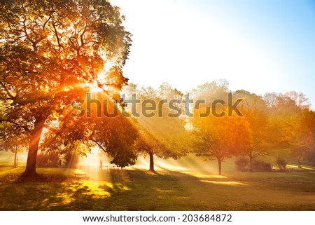 Sunset in autumn park. Autumn landscape.