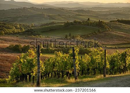 Sunset in Chianti, Italy - stock photo