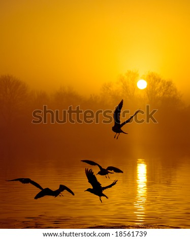 Sunset in fog with birds
