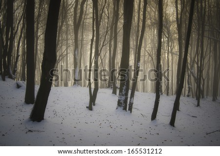 sunset in forest with snow - stock photo