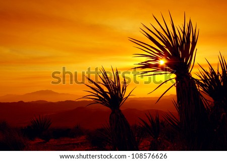 Sunset in Joshua Tree National Park, California - stock photo