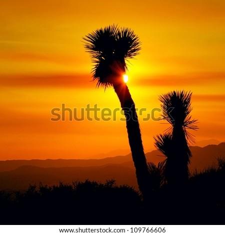 Sunset in Joshua Tree National Park, California, USA - stock photo