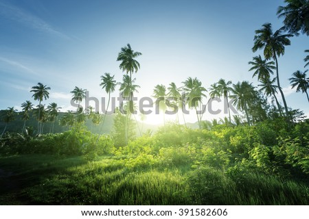 sunset in jungle, seychelles - stock photo
