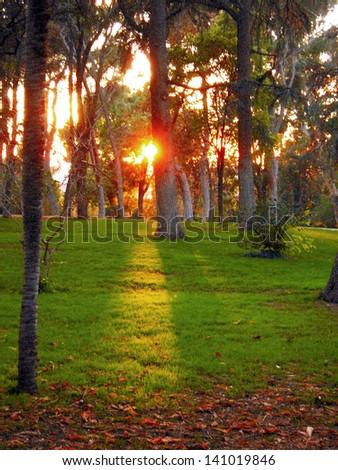 "Sunset in old park ""Buen Retiro"" of Madrid, Spain - stock photo"