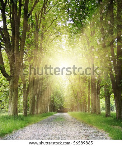sunset in park - stock photo