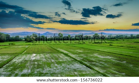 sunset in rice field - stock photo
