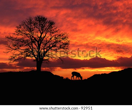 Sunset in Tennessee - stock photo