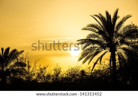 Sunset in the arabian desert - stock photo