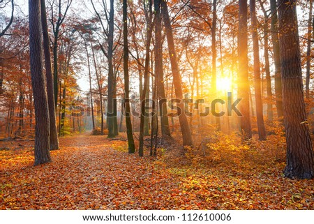Sunset in the autumn forest - stock photo