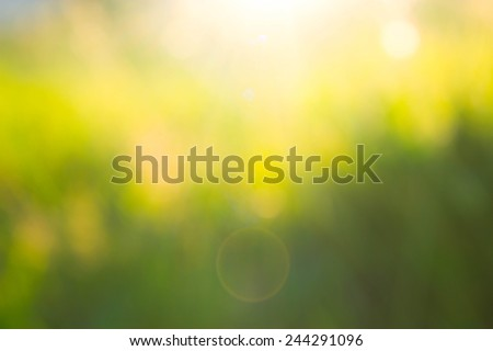 Sunset in the blurred grass - stock photo