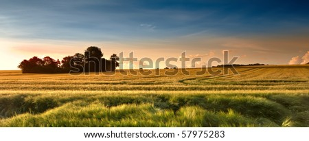 Sunset in the countryside in late summer - lots of copyspace - stock photo