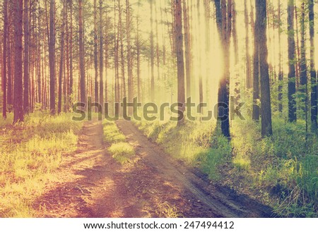sunset in the foggy woods after rain, retro film filtered, instagram style  - stock photo