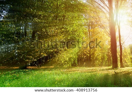 Sunset in the forest - autumn picturesque landscape. Soft focus applied.  - stock photo