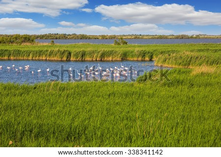 Sunset in the national park of Camargue in  delta of Rhone.  Flock of pink flamingos in the shallow lake - stock photo
