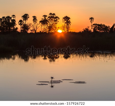 Sunset in the Okavango Delta, Botswana, Africa.  - stock photo