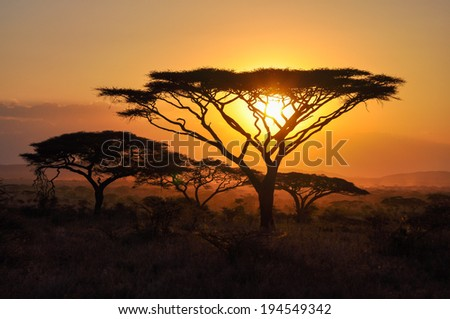 Sunset in the Serengeti reserve