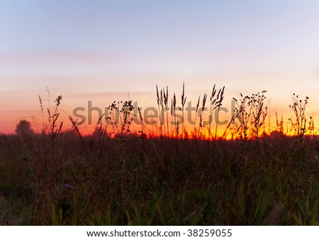 Sunset in the summer field