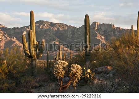 Sunset in the Tucson Desert - stock photo