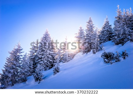 Sunset in the wood between the trees strains in winter period - stock photo