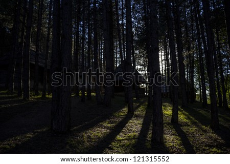 Sunset in the Woods with Log Houses in the Background - stock photo