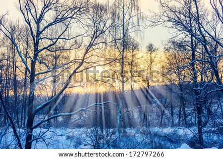 sunset in winter forest trees covered with snow