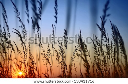 Sunset Landscape Scene With Tall Grass - stock photo