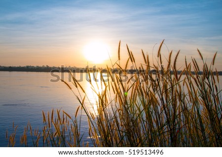 Sunset Landscape Scene With Tall Grass
