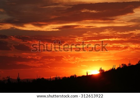 Sunset light with clouds and silhouette of saguaro cacti from the desert Southwest