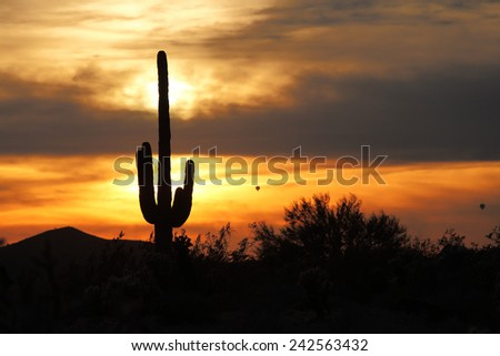 Sunset light with clouds, silhouetted saguaro cactus and hot air balloons in the desert Southwest - stock photo