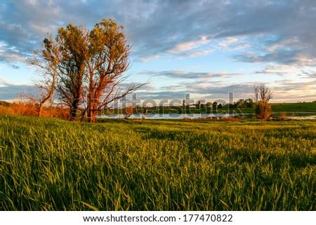 Sunset meadow - stock photo