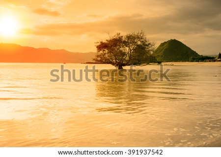 Sunset of a single tree at Seger Beach Lombok, Indonesia - stock photo